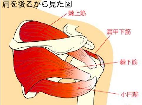肩 腱 板 損傷
